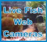live fish cameras